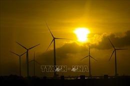 EVN có thể cắt giảm công suất điện gió ở mức cao do thừa điện