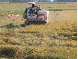 Nghị quyết 120: Hướng đi cho nông dân trong chuyển đổi cây trồng