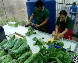 Kiên Giang hỗ trợ gần 30 tỷ đồng phát triển kinh tế tập thể, hợp tác xã