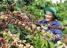 Đưa Nông sản Việt đến thị trường thế giới - Bài 1: Nỗ lực tìm thị trường 'khó tính'