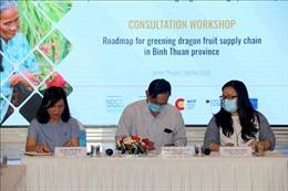 Lộ trình xanh hóa chuỗi cung ứng thanh long Bình Thuận