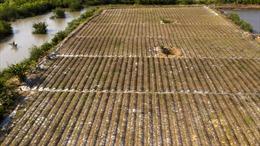 Xâm nhập mặn tại Đồng bằng sông Cửu Long giảm dần trong 10 ngày đầu tháng 5