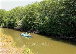 Trồng, bảo vệ rừng ngập mặn ven biển Bến Tre