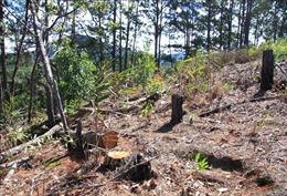 Lâm Đồng: Chủ rừng được phép ứng kinh phí ngân sách để triển khai trồng rừng sau giải tỏa