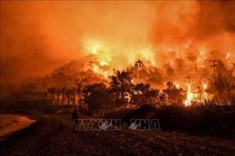 Hơn 50 vụ cháy rừng bùng phát tại Hy Lạp