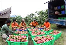 Bình Thuận hỗ trợ, kết nối tiêu thụ nông sản trong bối cảnh dịch COVID-19