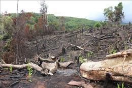Phản hồi thông tin của TTXVN: Phú Yên thành lập Tổ công tác xử lý tình trạng phá rừng ở Sơn Hòa
