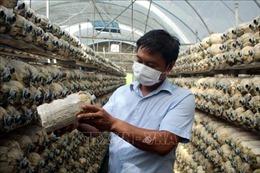 Làm giàu nhờ mô hình trồng nấm an toàn