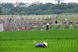 Hà Nội xây dựng 'vùng xanh' cung ứng nông sản