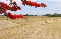 Hai khu dự trữ sinh quyển của Việt Nam được đưa vào đề cử tại UNESCO