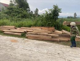 Tạm đình chỉ công tác nhân viên bảo vệ rừng tàng trữ trái phép gỗ