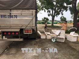 Chặn vụ vận chuyển 250 kg thịt gà 'bẩn' vào Hà Nội