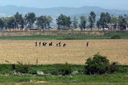 Bùng nổ dịch bệnh ở Triều Tiên do thiếu trầm trọng thuốc men, thiết bị y tế