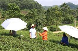 Một doanh nghiệp mỗi năm đầu tư hàng tỷ đồng hỗ trợ phát triển kinh tế - xã hội huyện Đại Từ