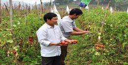 Tập trung phát triển sản xuất gắn với xây dựng nông thôn mới ở Thành Long