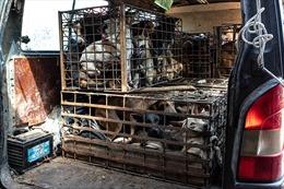 Một triệu chữ ký kêu gọi chấm dứt nạn buôn bán thịt chó mèo ở Đông Nam Á