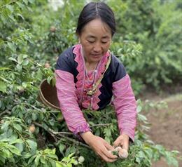 Shopee hỗ trợ xúc tiến tiêu thụ sản phẩm nông sản cho bà con nông dân