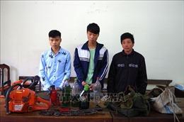 Bắt tại trận 3 đối tượng đốn hạ gỗ nghiến cổ thụ tại rừng đặc dụng Phong Quang