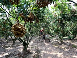 Ứng dụng công nghệ nano trên cây ăn quả tăng lợi nhuận 20%