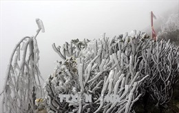 Từ ngày 29/12, vùng núi cao Bắc Bộ khả năng xảy ra băng giá và mưa tuyết