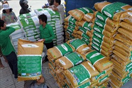 Xuất khẩu gạo của Campuchia tiếp tục sụt giảm