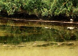 Trạm xăng bị chìm trên sông Kinh Thầy gây sự cố tràn dầu