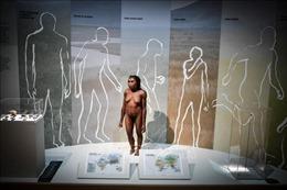 Phát hiện mới về người tiền sử Neanderthal