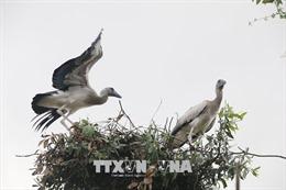 Cò nhạn quý hiếm 'đậu bến' Vườn chim Bạc Liêu