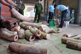Bắt giữ hơn 9,1 tấn hàng nghi là ngà voi được ngụy trang tinh vi