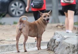 Hòa Bình khẩn trương dập dịch chó dại, không để lan ra diện rộng