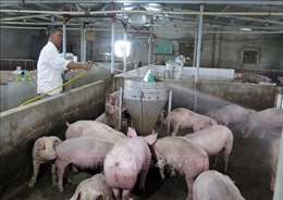 Xây dựng kịch bản nguồn cung cho ngành chăn nuôi