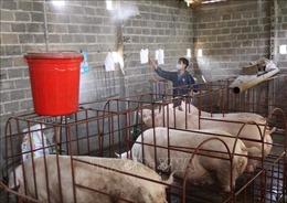 Cần giải pháp mang tính bền vững để kiểm soát dịch bệnh trên gia súc