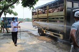 Phát hiện thêm ổ dịch tả lợn châu Phi tại Thừa Thiên - Huế