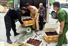 Tăng cường quản lý nhập khẩu, buôn bán loài tôm hùm nước ngọt