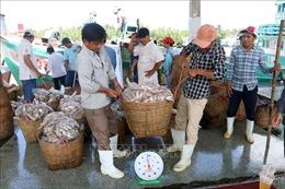 Ngăn chặn tàu cá vi phạm khai thác thủy sản vùng biển nước ngoài