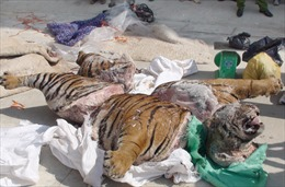 Bắt giữ 'ông trùm'đường dây buôn bán động vật hoang dãxuyên quốc gia