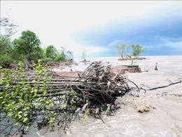 Biến đổi khí hậu 'bủa vây' vùng bán đảo Cà Mau - Bài 2: Xâm nhập mặn đến từ nhiều hướng