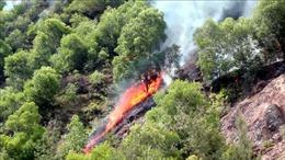 Cháy rừng tại thị xã Cửa Lò nghi do đốt vàng mã rằm tháng 7