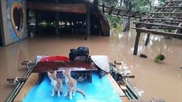 Trên 700 hộ dân phải di dời, một người mất tích do nước lũ dâng cao tại Đồng Nai