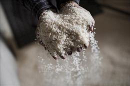 Hỗ trợ gạo cho học sinh Kiên Giang có hoàn cảnh khó khăn