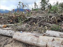 Phát hiện vụ phá rừng ở huyện Đam Rông, Lâm Đồng
