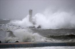 Siêu bão Hagibis: Đại sứ quán Việt Nam tích cực bảo hộ công dân tại Nhật Bản