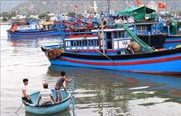 Ứng phó với bão số 5: Ninh Thuận kiên quyết sơ tán dân tại các khu vực nguy hiểm