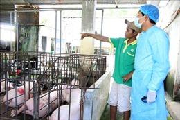 Nhiều địa phương hết dịch tả lợn châu Phi