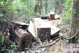 Mạnh tay xử lý lấn chiếm, sử dụng trái phép đất rừng