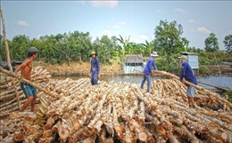 Cà Mau tái cơ cấu nông nghiệp - Bài 1: Phát triển kinh tế dưới tán rừng