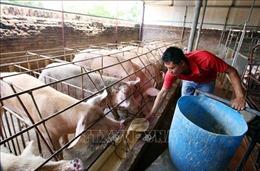 Ngành chăn nuôi: Tái cơ cấu phải trở thành mệnh lệnh