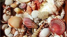 Cảnh báo tình trạng ngộ độc do ăn ốc biển lạ