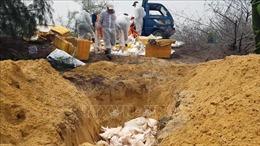 Phú Yên thông báo hết dịch tả lợn châu Phi