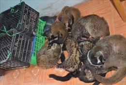 Kiểm soát chặt việc nuôi nhốt, buôn bán, tiêu thụ trái phép động vật hoang dã